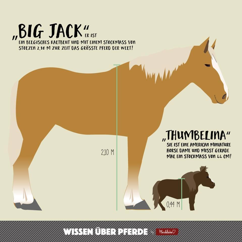 Größtes und kleinstes Pferd der Welt