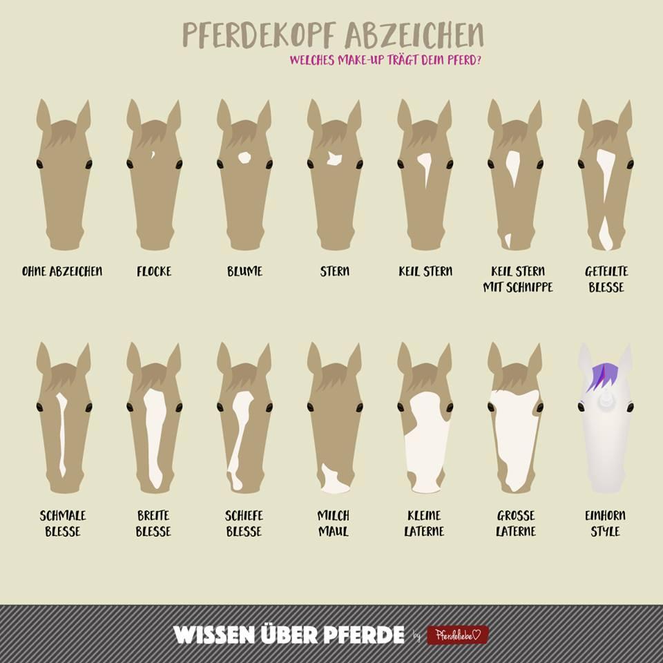 Abzeichen am Pferdekopf